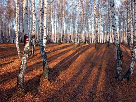 Красота глубокой осенью