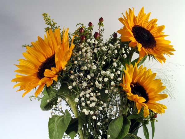 Цветы к 14 февраляподсолнухи